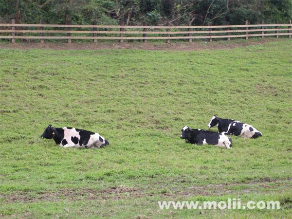 牧场怎么放养动物